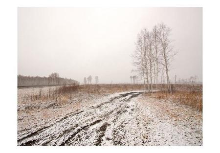 Fototapeta - Winter field