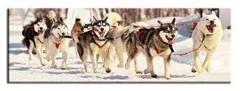 Obraz - Dogs&Cats 150x50 cm