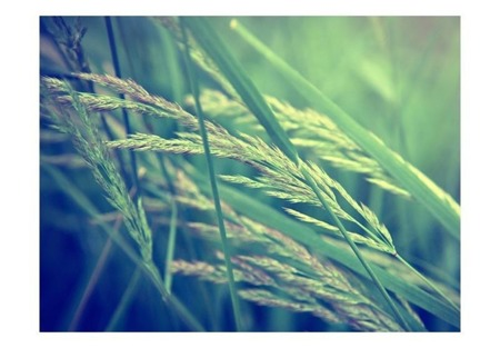 Fototapeta - Cereal field