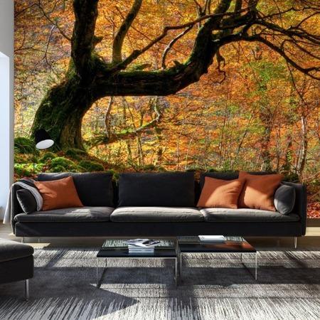 Fototapeta - Jesień, las i liście