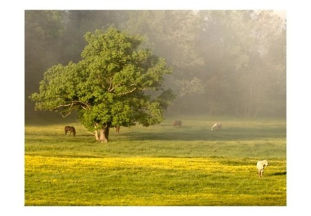 Fototapeta - Konie i drzewo