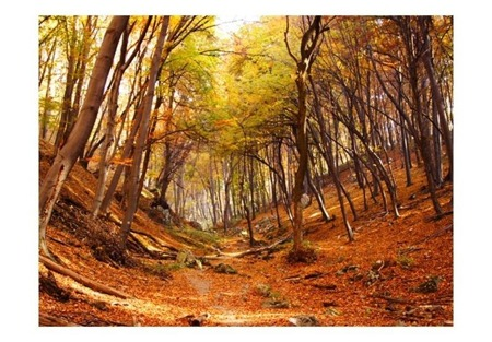 Fototapeta - Las w barwach jesieni