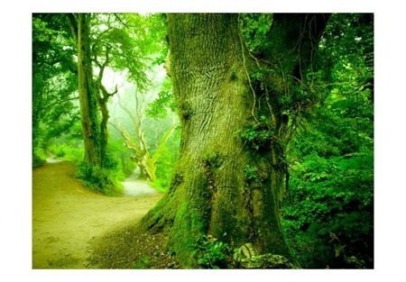 Fototapeta - Leśna ścieżka