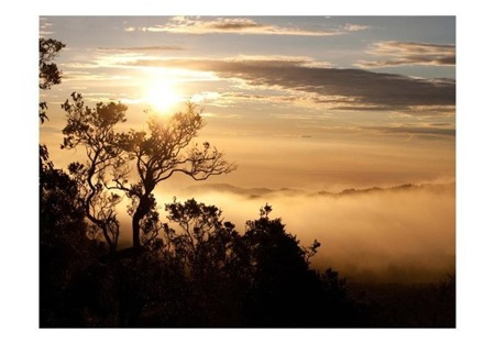 Fototapeta - Niebo i drzewa