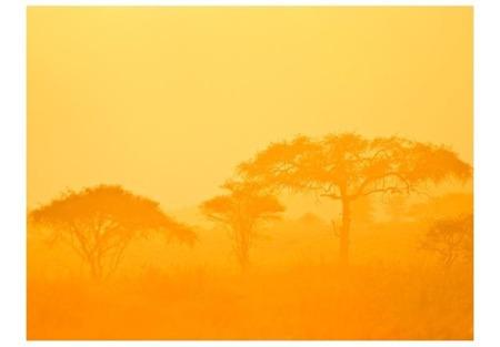Fototapeta - Orange savanna