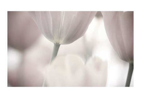 Fototapeta - Tulips fine art - black and white