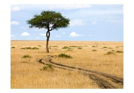Fototapeta - sawanna - Masai Mara