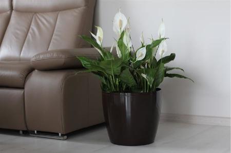 Osłonka do kwiatów Magnolia Cappucino 36x36 H31,6